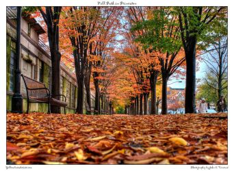 Fall Path in Princeton by yellowcaseartist
