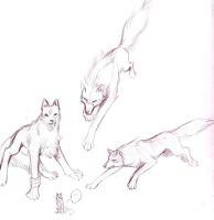 +WolfsRain+many sketches 1 by Brionna