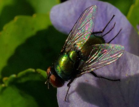 Green Fly by barcon53