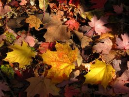 .fallen leaves. by Foozma73