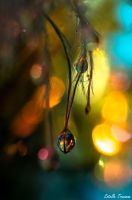 Bauble Droplet... Merry Christmas by needcaffine