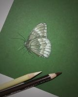 Brown and cream butterfly on green paper by butterflyworldart