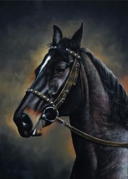 Horse portrait by Fel-X