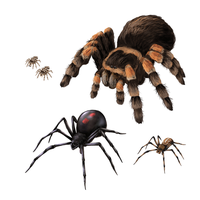 How to draw spiders - movement and species by MonikaZagrobelna