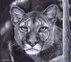 My Puma, Pastels and Charcoal by AngelaMaySmith
