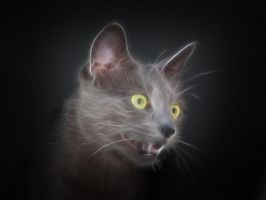 Fractal cat for Lajka 04 by oo0d3v1l0oo