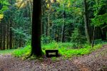 bench in the woods by Mittelfranke