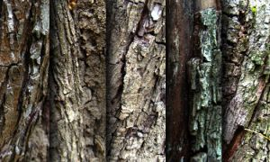 Tree bark - texture pack by raduluchian
