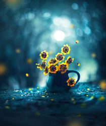 Ode to moonlight by arefin03