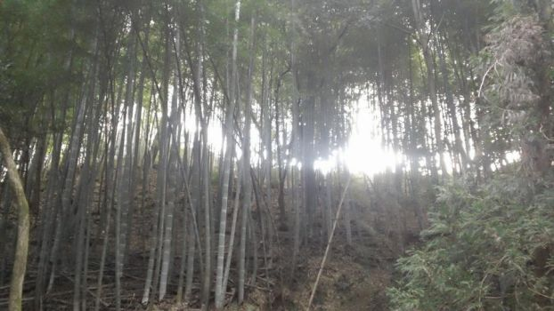 sunlight through the bamboo by rith-sv