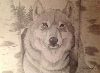 Timber Wolf by eckoh47
