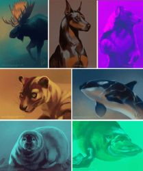 Color palette studies by ShadeofShinon
