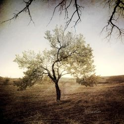 Soul Tree II by incisler