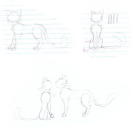 Cat Sketches !! by IvypoolForever