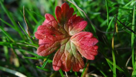 Small leaf in autumn colors October 3th by chetje