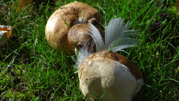 Feather between the mushrooms by chetje