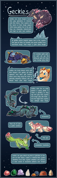 Geckles: Species Guide by Nerblesocks-Adopts