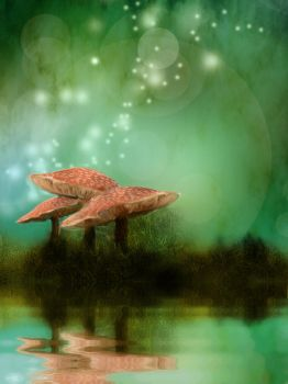 082 Fly Agaric Reflection 02 by Tigers-stock