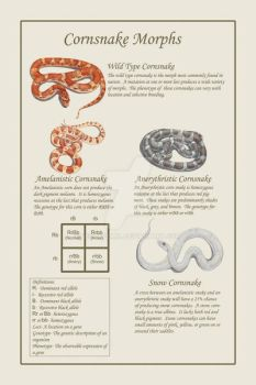 Cornsnake poster by BeccaPearl