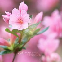 Springs Coming VII by Alyphoto