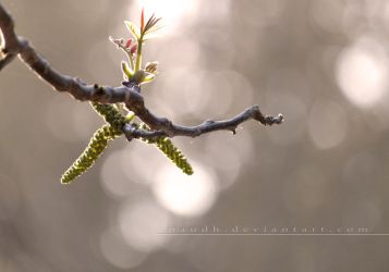 _a new day by Naudh