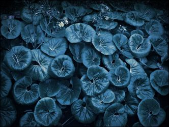 Blue leaves by agolam