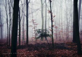Misty October Forest by Justine1985