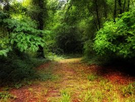 take the path by HippieVan57