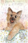 Cairn Terrier by Zhiibe