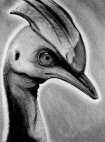 this is a cassowary by starblinx