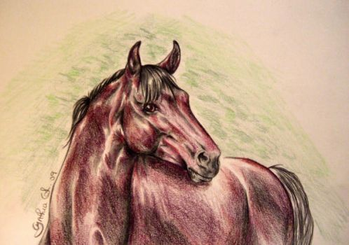 Horse Portrait by Shadow1305