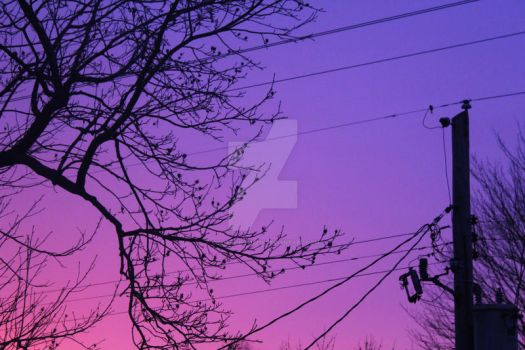 pink and purple sunset