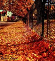 Autum in the States by yaseacabo