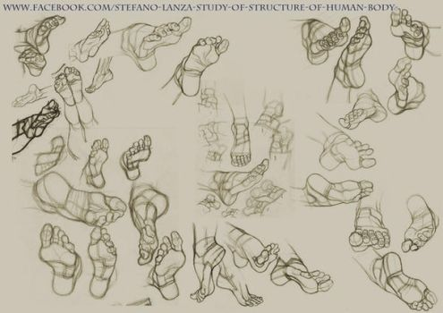 Study of structure of human body (page) by StefanoLanza
