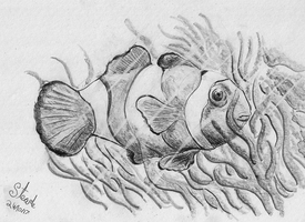 Second clownfish drawing by SulaimanDoodle