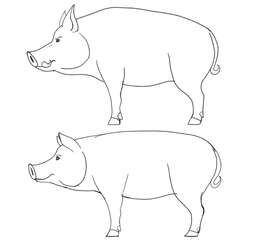Pig Practice by Troyodon