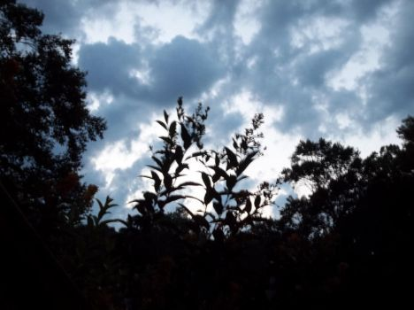 Sky with a plant by somebodi