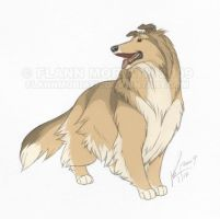 Rolle the Shetland Sheepdog by FlannMoriath