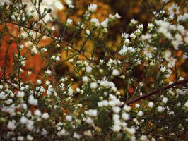 Autumn Daisies by Lochnessica