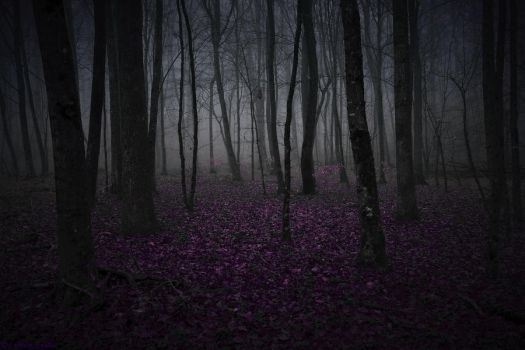 Dreamy Forest by LillianEvill