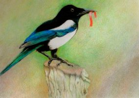 Magpie by JettieHier