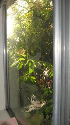 Out My Window 2 by Scriddles