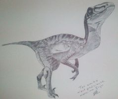 Velociraptor by LoiseFenollCreation