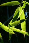 bamboo aesthetic 02 by Ludo38