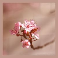 :: welcome spring 2015 :: by Phantom-of-light