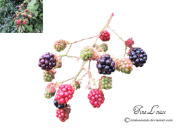 Berries by TinaLouiseUk