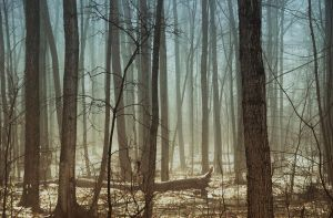 One Foggy Day by MistyForest