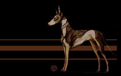 Podenco by Kkulkutauti
