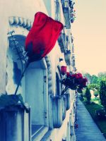 Rose in the cemetery by Darkans