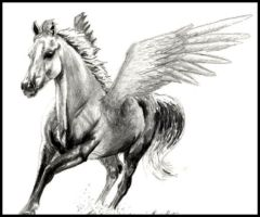 Pegasis Cantering by equusrevelrous